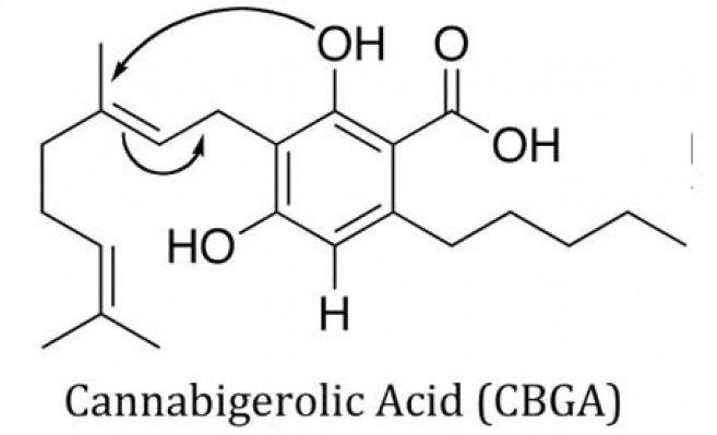 CBGA cannabinoid molecule structure